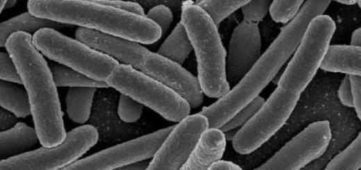 13950925_bakterium